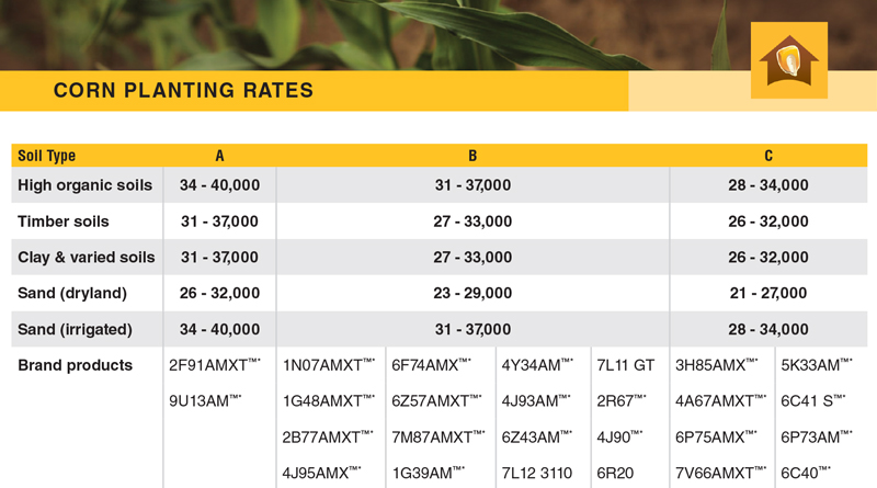 Corn Planting Rates
