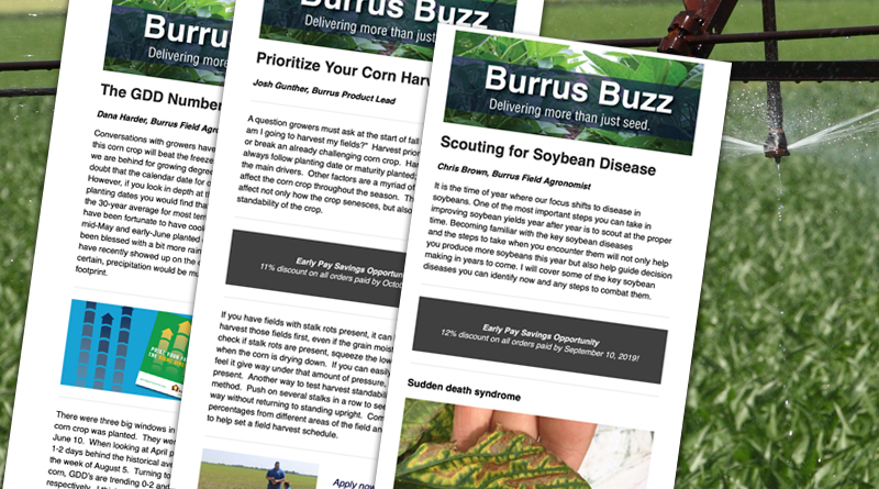 Burrus Buzz Newsletter