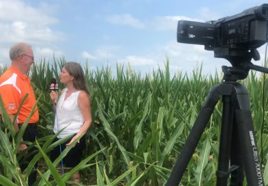 Growing Seed Corn – AgriBusiness Today
