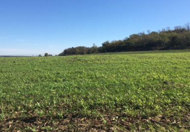 Considering cover crops