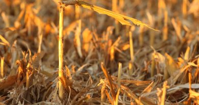 Learn from Your Corn Stalks