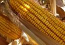 Estimating Corn Dry Down